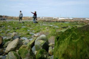 Grønn strand i Bretagne-kommunen Pleubian. Foto: ERIK AASHEIM